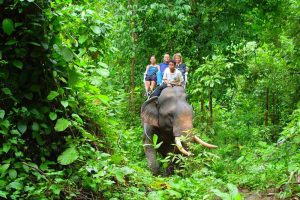 Elephant-trekking-Khao-Lak-1-Day