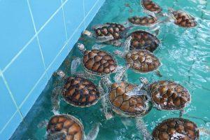 Sea Turtle Conservation Center-2